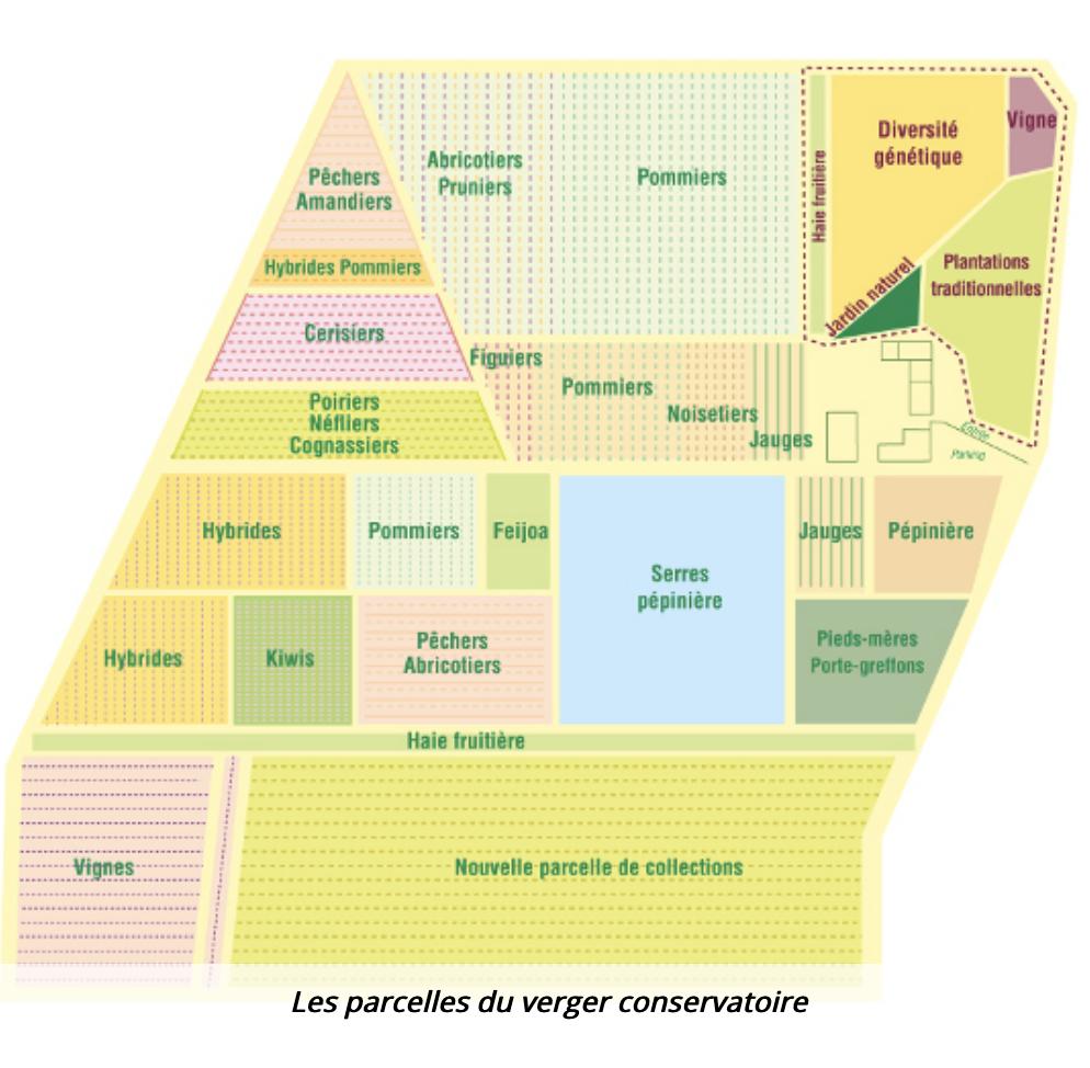 Le Conservatoire Végétal Régional d'Aquitaine
