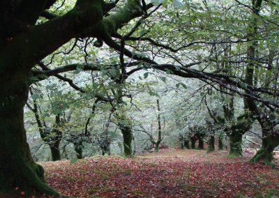 Pays basque Espagne ©DM